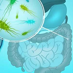 Inulina per il benessere della flora intestinale